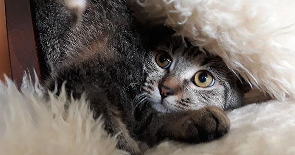 Mietrecht Welche Haustiere Sind In Wohnungen Erlaubt